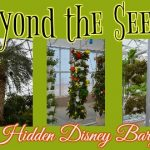 Behind the Seeds – A Hidden Disney Bargain